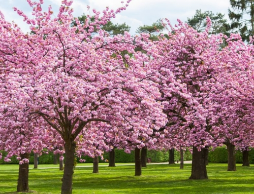 Spring is Coming! Here Are Some Events in Bucks, Montgomery, and Philadelphia Counties